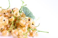 Free Currant Royalty Free Stock Photography - 2990867