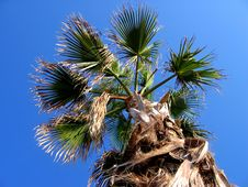Free Tropical Palm On Deep Blue Sky Royalty Free Stock Photos - 2991598