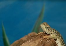 Free Gecko Stock Images - 2991844