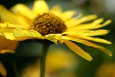 Free Yellow Flower Stock Photos - 2992423