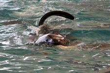 Kiler Whale Fin Stock Photography