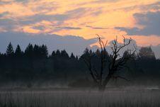 Free Wetland Sunrise Royalty Free Stock Photo - 2993205