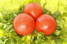 Free Red Tomatoes On Greenery Royalty Free Stock Image - 2993946