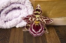 Free Bath Items. Spa Royalty Free Stock Photography - 2994137