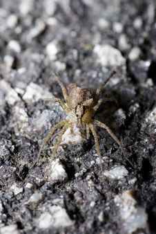Free Side Lighted Spider Stock Image - 2995411