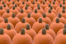 Free Pumpkin Background Stock Image - 2995461