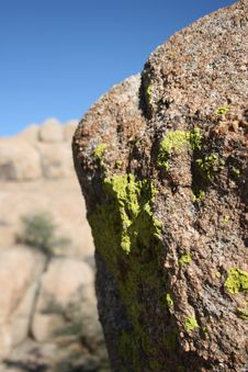 Free Arizona Lichens Royalty Free Stock Photos - 2995798