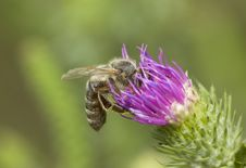 Free Working Bee Stock Images - 2995804