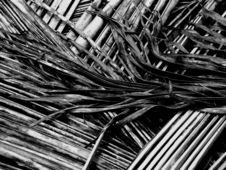 Dry Palm Pattern Stock Photo