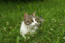 Free Kitten In The Grass Stock Images - 2996624