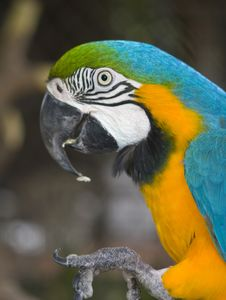 Free Parrot Royalty Free Stock Images - 2996889