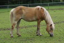 Free Grazing Horse. Stock Image - 2997111