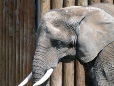 Free Elephant Royalty Free Stock Photo - 2997215