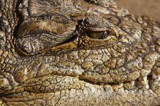 Free Crocodile Eye Stock Photo - 2997230