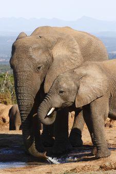 Free Elephant And Child Drinking Stock Image - 2998821