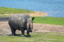 Free Big Rhinoceros Stock Photography - 2998952