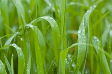 Free Grass Stock Photography - 2999632