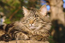 Free Cat On A Stub Royalty Free Stock Photos - 2999728