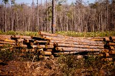 Free Logging Stock Images - 29904544