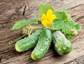 Free Cucumbers With Leaves Royalty Free Stock Photos - 29914528