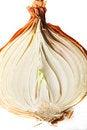 Free Golden Onion Stock Photos - 29918133