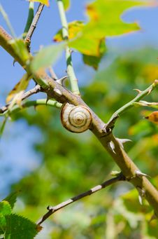 Free One Small Snail Holding On A Plant Stem. Nature Background Stock Image - 29910771