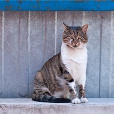 Free Cat Sitting At The Fence And Looking At The Photographer. Stock Photos - 29911473