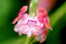Free Flower Of Love Royalty Free Stock Image - 29911746