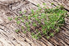 Thyme Herb. Stock Image