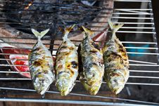 Free Fish On A Grill Stock Photos - 29916553