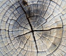Free Closeup Of Old Pine Saw Cut. Stock Images - 29919814