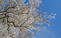 Free Winter Branches Royalty Free Stock Photo - 29922575