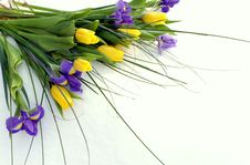 Free Bouquet Of Tulips And Irises Royalty Free Stock Photo - 29921485