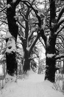 Free Winter Forest Stock Image - 29921981