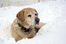Free Dog Stock Photography - 29922012
