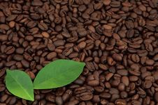 Free Coffee Beans Royalty Free Stock Photography - 29922517