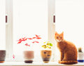 Free Red Cat Sitting On The Window Royalty Free Stock Photos - 29931718