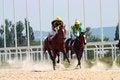 Free Horse Racing. Royalty Free Stock Photo - 29936175