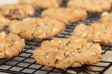 Peanut Butter Cookies Cooling Royalty Free Stock Image