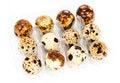 Free Quail Eggs In A Box Stock Image - 29943951