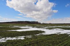 Free Bits And Pieces Of Snow On The Wheat Field By An Early Spring Stock Images - 29943424