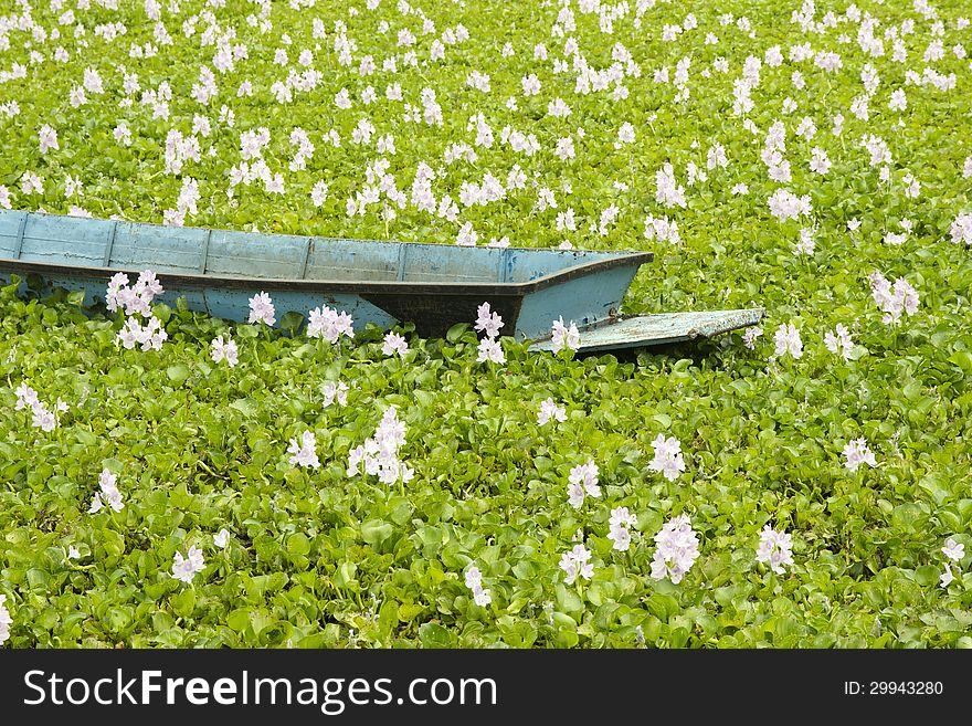Boats & flowers.