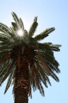 Free Sunlight Through A Palm Tree In The Blue Sky Royalty Free Stock Photography - 29952427