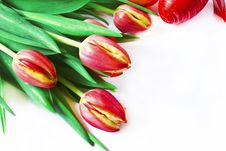 Free Bouquet Of Red Tulips Royalty Free Stock Photography - 29955537