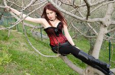 Woman With Red Corset And Leggings Sitting On Tree Royalty Free Stock Image