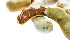 Free Ripe Tamarind Royalty Free Stock Photo - 29966975
