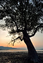 Free Silhouette Of Tree Sunset Royalty Free Stock Photo - 29970015