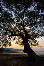 Free Trees Silhouette At Sunset Stock Photography - 29970872