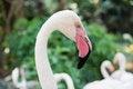 Free Pink Flamingo Head Stock Image - 29974481