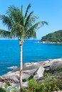 Free Coconut Palm On Stony Coast Royalty Free Stock Images - 29975609